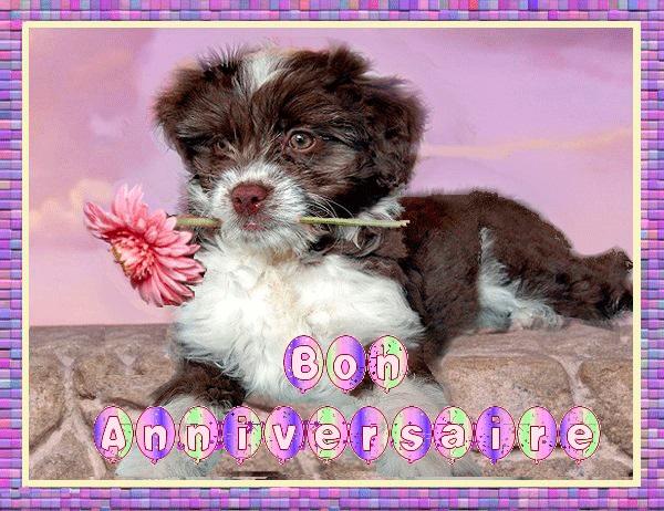 carte anniversaire avec chien