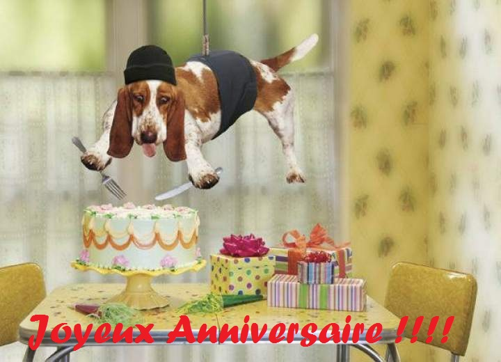 Carte Anniversaire Simple Chiens Dogs Simple Birthday Cards