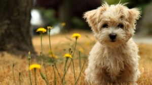 dog wallpaper hd