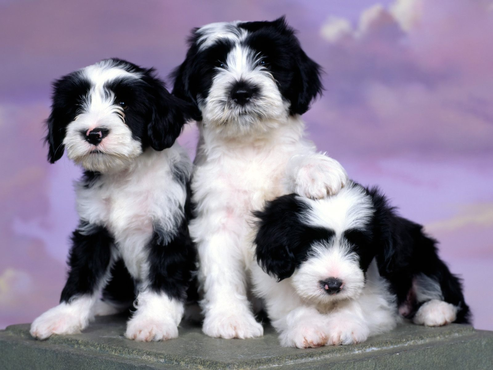 Fonds D 39 Cran Hd Chiens 4 Dogs Hd Wallpapers 4