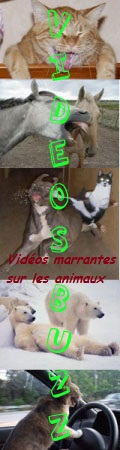 video animaux